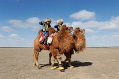 Shaggy Beasts Compete in World's Largest Camel Race - NBC News