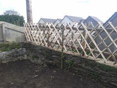 Sweet chestnut trellis fence Trellis Fence, Sweet Chestnut, Mesh Fencing, Fendi, Leaves, Rustic, Building, Nature, Lattice Fence