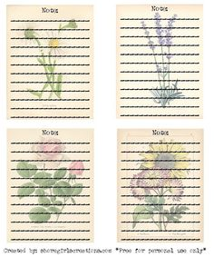 Shoregirl's Creations: Seed Packets