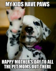 Most Inspiring Dalmation Chubby Adorable Dog - 163b8750308eef967451b595f7d72f7a--adorable-puppies-adorable-animals  Trends_8497  .jpg