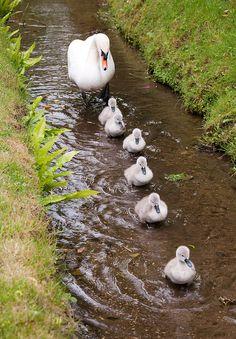 This way, Mama!
