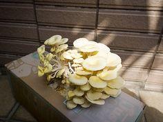 就是菇種植攝影 by imDannny, via Flickr