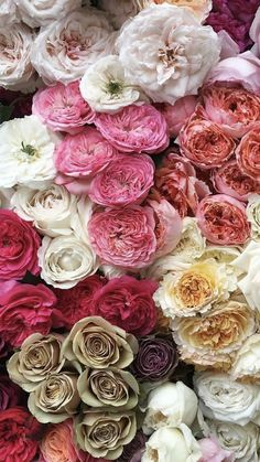 Wholesale Flowers And Supplies, Flowers For Sale, Wedding Flowers, Vegetables, Rose, Plants, Pink, Vegetable Recipes, Plant
