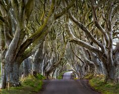 Dark Hedges. This Is The Ultimate 2017 Travel Bucket List For Ireland