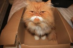 """""""This box smells funny, but I appreciate the thought."""" 