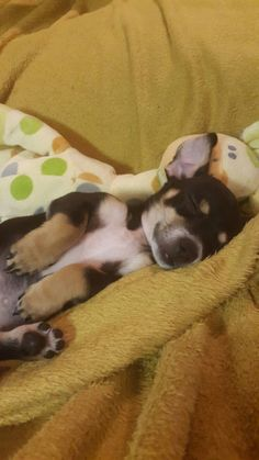 cute pepe is our sweet little puppy boy post blog - 236×419