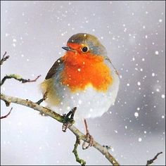 Greeting card - Winter Robin