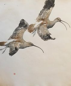 CURLEWS IN FLIGHT Karl Martens                                                                                                                                                                                 More