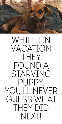 While On Vacation They Found A Starving Puppy... You'll Never Guess What They Did Next!
