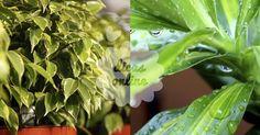 Incrível! Filtre o ar de sua casa com recurso a 15 plantas ornamentais! - # #plantas #purificaroar