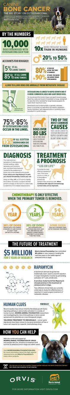 Canine Bone Cancer: The Big Story on Osteosarcoma