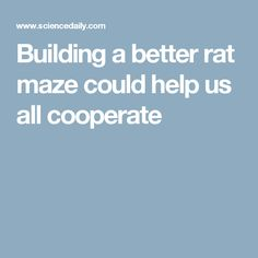 Building a better rat maze could help us all cooperate