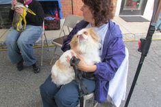 Ridgewood Veterinary Hospital's 7th Adopt-A-Pet Day.