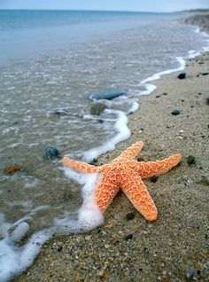 Star Fish, Provincetown, Cape Cod. Just visited summer of 2013. No Starfish though!