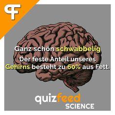 """Das #Gehirn hält nichts von einer """"Low-Fat-Diät"""" ;)  Ganz schön schwabbelig. Der feste Anteil unseres Gehirns besteht zu 60% aus Fett."""