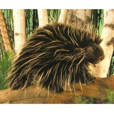 Porcupine hand puppet by Folkmanis! This is the only way I would snuggle a porcupine!
