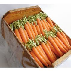 Napoli Early Carrots :: For winter garden Hydroponic Gardening, Hydroponics, Organic Gardening, Gardening Vegetables, Indoor Gardening, Seed Packaging, Crop Rotation, Carrot Seeds, Packaging