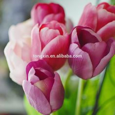 Home Garden Decor Silk Artificial Long Single Stem Tulip Wedding Flower , Find Complete Details about Home Garden Decor Silk Artificial Long Single Stem Tulip Wedding Flower,Artificial Silk Flower,Long Single Stem Tulip,Wedding Home Garden Decor from -Foshan Tongxin Artificial Flowers Co., Ltd. Supplier or Manufacturer on Alibaba.com