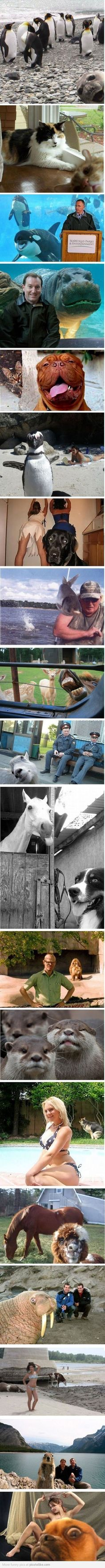 photoboming animals ahahah x'D these are actually pretty funny!