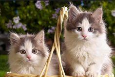 #pretty#cats