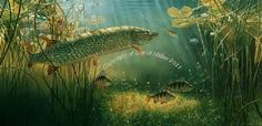 pike on the plug print by wildlife artist david miller