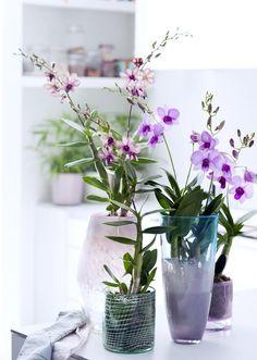 Jolie orchidée - Lili in Wonderland