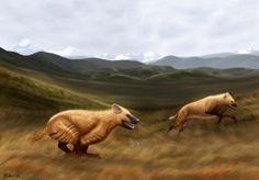 New extinct hyena from Tibet: Life reconstruction of a pair of Chasmaporthetes gangsriensis. Image credit: Julie Selan.