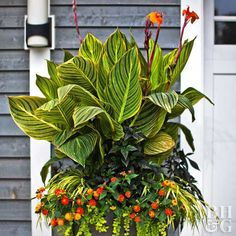 Tropical flowers transform your patio into a colorful outdoor living room. If you live in a tropical climate, you can grow exotic flowers in the ground, where many will become small trees or shrubs. Tropical flowers grow slightly smaller in pots.