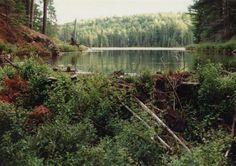 1991PogLake - This image was found on this great website,  notes.newmaker.net Algonquin Park, Notes, Mountains, Website, Nature, Travel, Image, Report Cards, Naturaleza