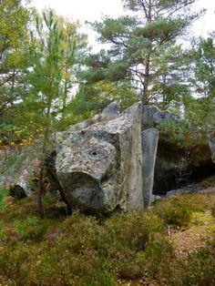Sortir - Sur les traces de l'Art Rupestre en forêt de Fontainebleau - Massif des Trois Pignons - Une semaine à Paris-Forêt