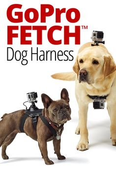 Dogs can go places we humans often can't, so why not make Fido your cameraman? Mount a GoPro HERO camera on man's best friend, and see the world in a whole new way. This harness features two mounting locations: the chest, for bone-chewing, digging and playing with toys, and the back, for over-the-head shots of running, jumping, and fetch. The Fetch™ Dog Harness is made of washable, water-friendly material, so your dog can swim, play and get dirty while wearing it.