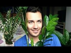 How to Take Care of Plants zamioculcas Inward House Vase Easy to care and long-term Vlog Gay Youtube, Take Care, Plant Leaves, Take That, Vases, Gardening, Paisajes, Plants, Flowers
