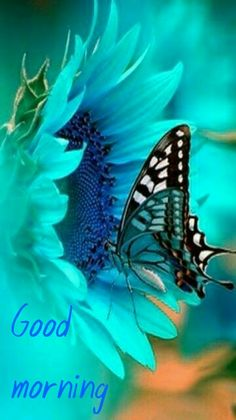 Good morning my sweet butterfly