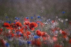 *** by Beata Wcislo on 500px