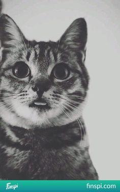 hihihihhi ale fajny Filemonek^^ miauuuu, miauuu, miauuu #kot #pupile