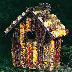 Indian corn edible birdhouse