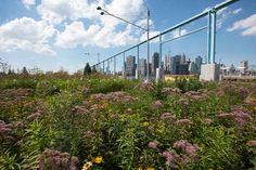 Pier 6 Flower Field Tour at Brooklyn Bridge Park Brooklyn Bridge Park, Horticulture, Nyc, Tours, Landscape, Flowers, Plants, Outdoor, Lisa