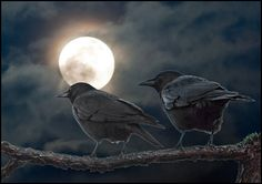 """~~""""Fly me to the Moon"""" by TT_MAC ~ A couple of crows and an alluring full moon~~"""