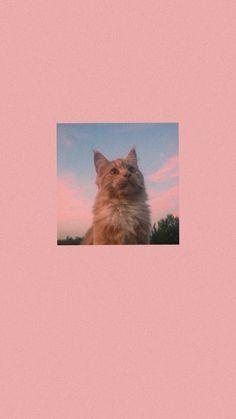 Pink Wallpaper, Cartoon Wallpaper, Animals Beautiful, Cute Animals, Cat Aesthetic, Baby Dogs, Aesthetic Wallpapers, Emoji, Cool Photos