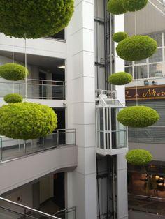 Meamea - Plantes stabilisées