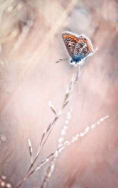 """The love story of the lonely butterfly"" by BLOAS Meven    Awesome Photo"