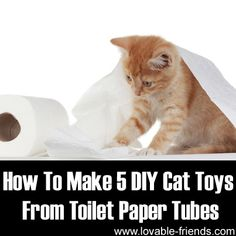 Protecting Cats From Cancer Diy Cat Toys, Pet Toys, Kitten Toys, Crazy Cat Lady, Crazy Cats, Cat Info, Cat Crafts, Dog Snacks, Dog Treats