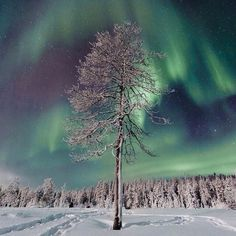Northern lights auroras