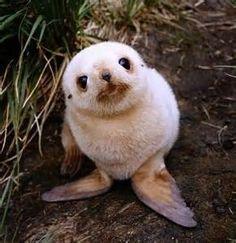 Resultados de la búsqueda de imágenes: animales bebes - Yahoo Search