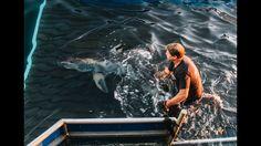 Expedition Nantucket: Cisco the White Shark