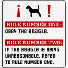 Apparently we didn't get this rule book with Isabel, but boy did we learn. Haha #beagle
