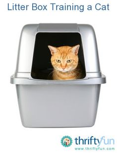 how to train a cat to use kitty litter