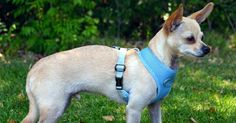 The Dog Geek: Product Review: Gooby Freedom Harness