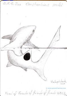Carnet Bleu: Encyclopedia of…shark, vol.XII p8, pencil on paper by Pascal Lecocq, The Painter of Blue ®, 7x5, 2013, lec888dp8, public coll. Brooklyn Art Libr...