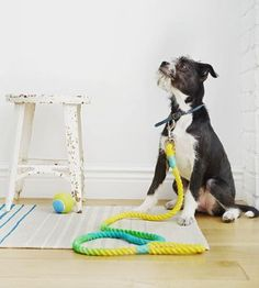 dyed dog leash craft